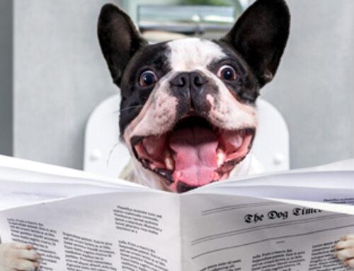 """Infografik: Das, was Headlines wirklich """"geil"""" macht Die 10 Kennzeichen erfolgreicher Online-Überschriften in einer übersichtlichen Checkliste"""